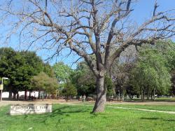 Brooktree Park
