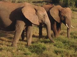 Addo elefant-nationalpark
