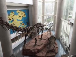 Nanjing Paleontology Museum
