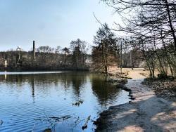 Grunewald Forest