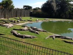 Croc City Crocodile and Reptile Park