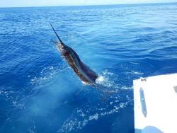 Captain Bill Kieldsen - Costa Rica Fishing