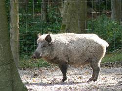 Parc Animalier de Roumare