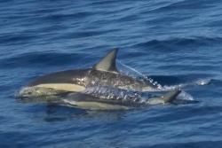 Dolphin Seafaris