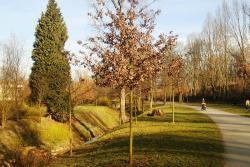 Královská obora-Stromovka