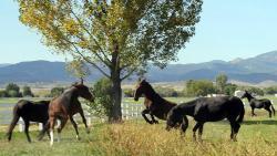Lucky Three Ranch