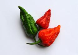 naga chillies