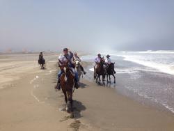 Peruvian Paso Horseback riding