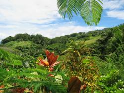 Flora Tropica Gardens