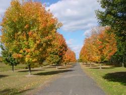 Northwest Park