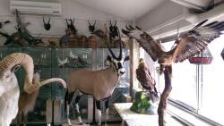 Darabad Museum of Natural History