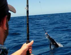 Cuyuyo's Sportfishing