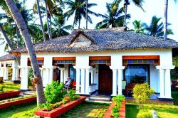 Palm Tree Bungalow