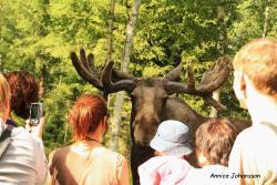 Moose Park Kybacka