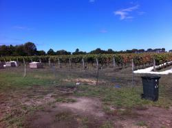 Basalt Wines