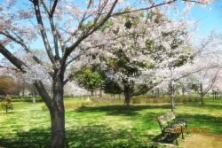Taman Toneri