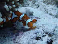 Dive 7 Seas