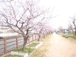 Waterside Promenade Uozaki (Kobe City Architectural Department West Water Environment Center)