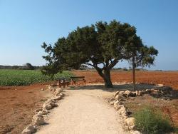 Aoratos Tree