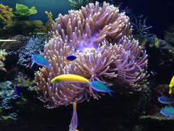 Oceanarium Tainy Okeana