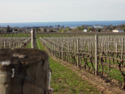 Niagara Vino Wine Tours