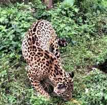 Zoologico de San Martin