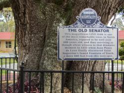 The Old Senator Tree