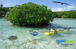Ecofiwi Turismo Ecologico