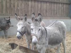 The Flicka Foundation - Donkey Sanctuary