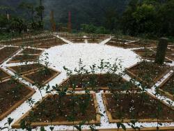 Bagua Tea Garden
