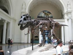 菲尔德自然史博物馆