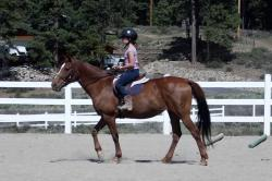 Piping Rock Equestrian Center