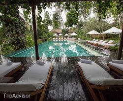 The Pool at the COMO Uma Ubud, Bali
