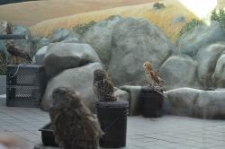 Lindsay Wildlife Museum