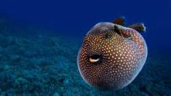 Big Island Snorkel Guide