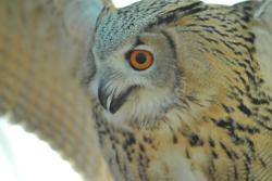 Baytree Owl and Wildlife Centre