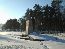 Monument Black Tulip