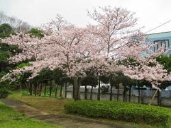 Nagafuji Park