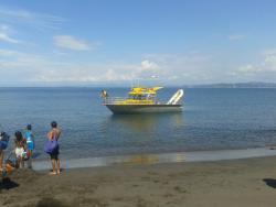 Whale Island Tours