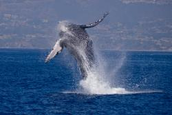 Dana Wharf Whale Watching & Sportfishing