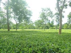 Tezpur Assam India