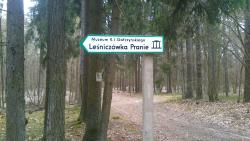 Pisz Forest