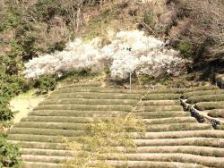 Mt. Shoto