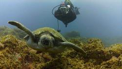 Arrecifal Dive Centre