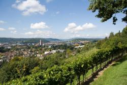 Baumli - Viewpoint