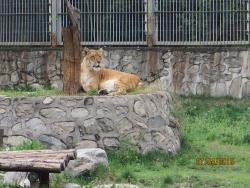 Qinling Wild-life Zoo