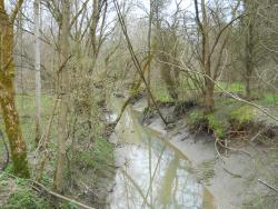 Two Creeks Conservation Area
