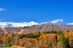 Hakuba Iwatake Ski Resort/Lily Farm & Mountain View