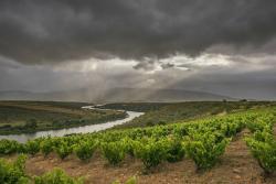 Sijnn Winery