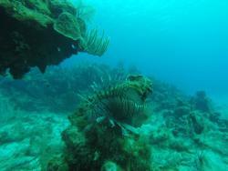 Hammerhead Dive Center